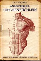 Anatomisches Taschenbüchlein