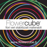 FlowerCube - rose stabilizzate