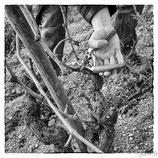 La vigne et le vin #17