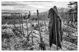 La vigne et le vin #16