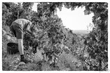 La vigne et le vin #7