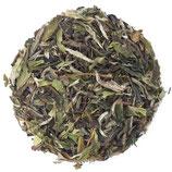 Pai Mu Tan (BIO) China - Weißer Tee