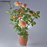 EDG Rosa Garden Con Vaso