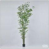 Edg Pianta Bamboo H.235