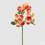 EDG Mazzo 15 Rose Blush