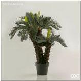 Edg Pianta Palma Cycas H.100