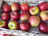 Welland appels Oogst 2018