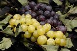 Grape Fantasia 30 ml / 50 ml / 100 ml