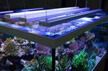 Bis 130 cm Aqualeds Aquabar LED Lampe Meerwasser LED