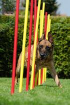Traningsplan für Hundesportler - 1 Hund