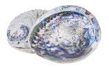 Abalonenmuschel als Seifenschale