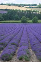 Lavendelhydrolat kbA