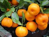 Parfümöl Lime-Basil-Mandarine