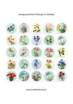 Lámina 25 Imágenes estampados Flores Vintage II 30x30mm
