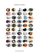 50 Imagenes de caballos 18x25mm