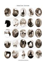25 Imagenes de caballos Sepia 30x40mm