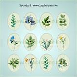 Lámina de Imágenes Botánica I
