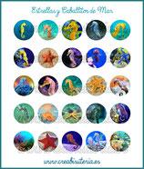 Lámina imágenes Fondo Marino Caballitos y estrellas de mar
