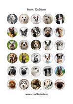 30 Imágenes  de perros 30x30mm