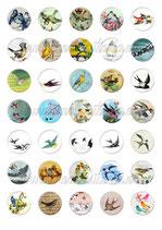35 Imágenes vintage de pájaros 30x30mm