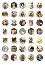 35 Imágenes de gatos vintage 30x30mm