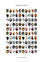 100 Imagenes de caballos 13x18mm