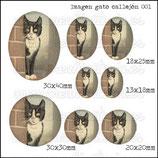 Imagen gato en callejón vintage 001