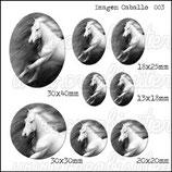 Imagen caballo 003