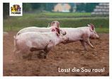 """Postkarte """"Lasst die Sau raus!"""" - Variante II"""