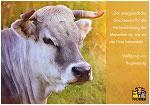 "Postkarte ""Goldene Kuh!"" - Zitat Wolfgang von Regensburg"