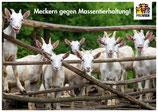"""Postkarte """"Meckern gegen Massentierhaltung"""""""