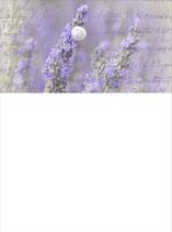 SB_Lavendel
