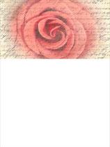 SB_Rose