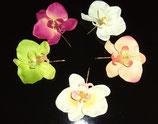 Haarnadel Orchidee