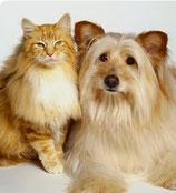 Zo borstel ik mijn hond/kat