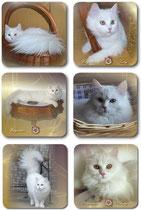 Katzenuntersetzer Set