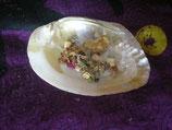 Räucher Muschel Pauna Shellmit Perle