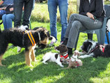 Puppy Training and Socialisation Course - 5 consecutive weeks - starting October 24th @ 12pm (PE28 0BU)