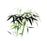 BambusÖl  Erfrischung/ Huile bambou Fraîcheur  50ml
