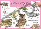 Postkarte Lëtzebuergesch Tiere 2