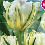 八重咲きチューリップ ホワイトッヴァレー