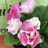 プレミアムバラ咲きジュリアン イチゴのミルフィーユ