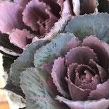 萌花ブラック