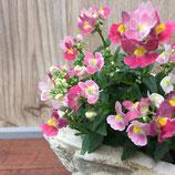 ネメシア メーテル ほの花