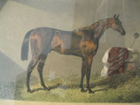 Biedermeier Druck, coloriert, J.F.Herring, Merry Monarch, Winner of the Derby 1845