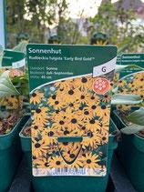 Sonnenhut - Rudbeckia