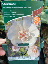 Stockrose - Alcalthea suffrutescens