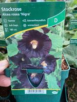 Stockrose - Alcea rosea