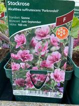 Stockrose - Alcathea suffrutescens