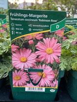 Frühlings-Margerite - Tanacetum coccineum